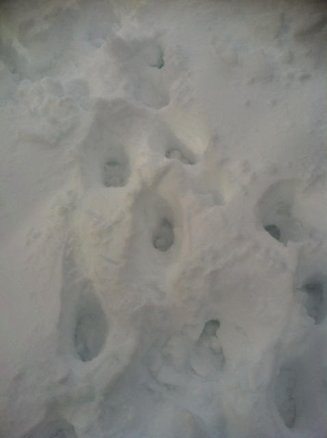 """Daddy, why is there only one set of footprints?""  ""Well, son, because you forced me to carry you because you were too afraid of, and I quote, getting snow in between your toes."""